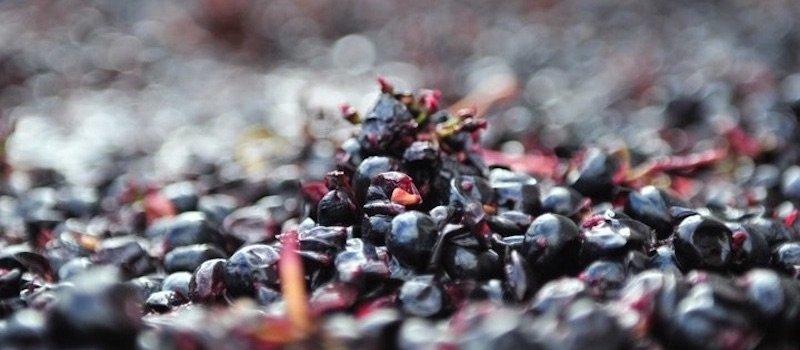 Drink in the new Eloquesta Wines website