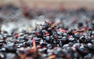 Eloquesta Wines